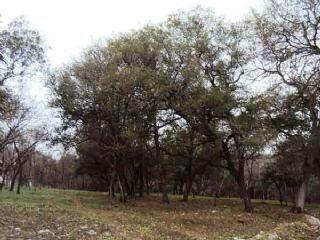 terreno campestre el huajuquito