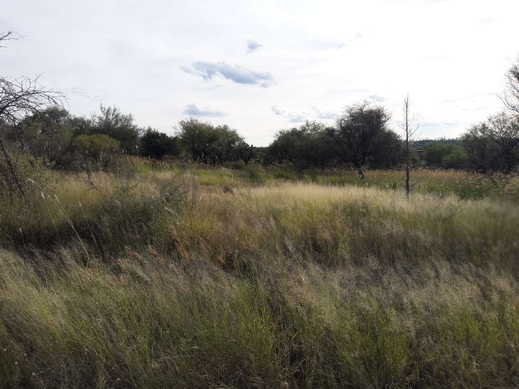 terreno campestre en el sabinal, aguascalientes