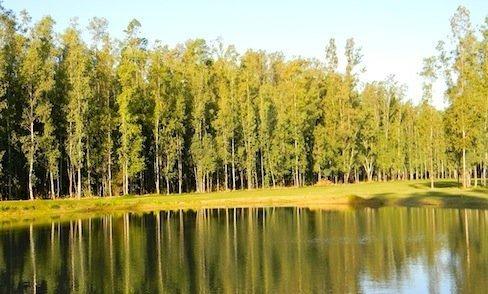 terreno campo timbo - oliveros - lote de 600 m2