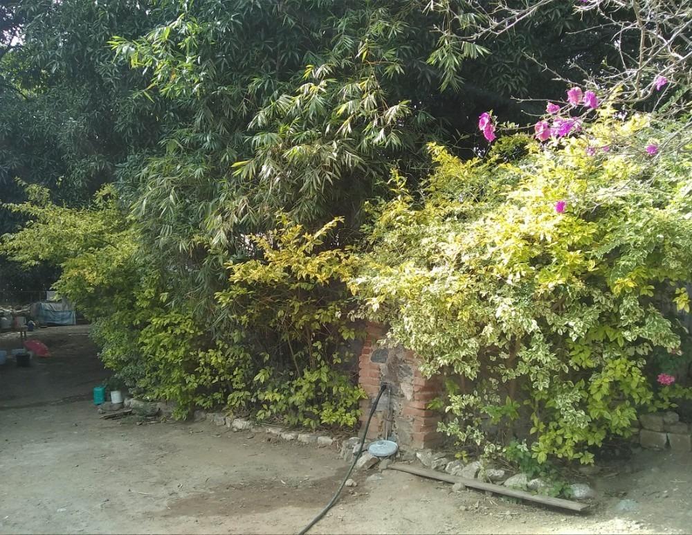 terreno centrico en teotitlan de flores magon