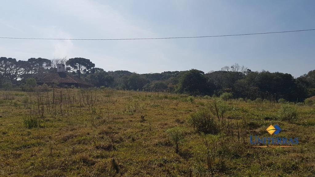 terreno com 114.950m² à venda em são josé dos pinhais - roseira - te0084