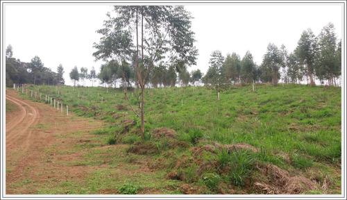 terreno com bosque do lado