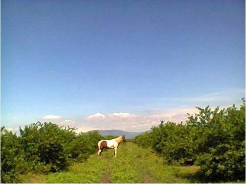 terreno comercial en venta limonera tecoman