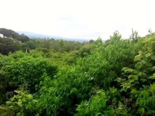 terreno comercial en venta lomas de la selva