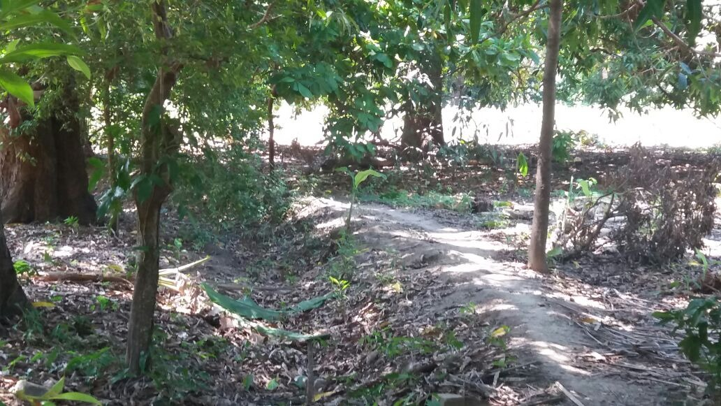 terreno con arboles frutales