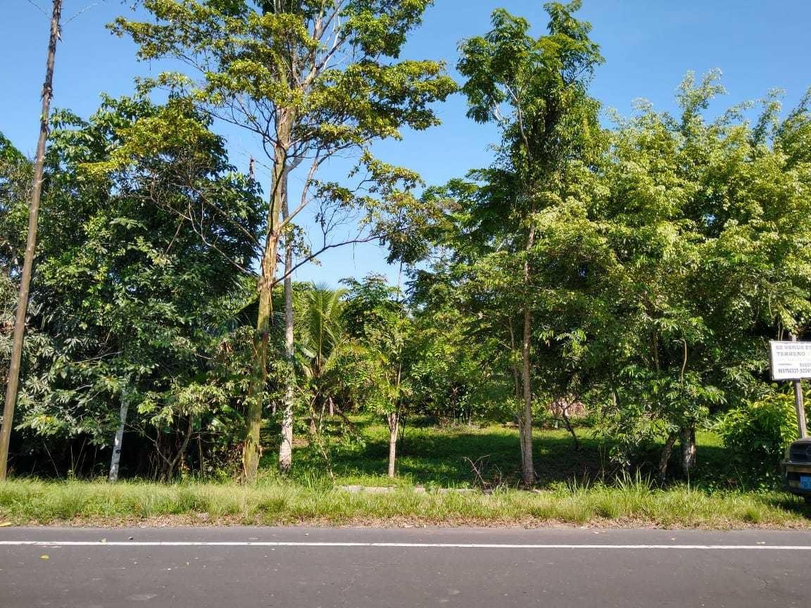 terreno con arboles  maderables/cedro y proyec a piscigranja