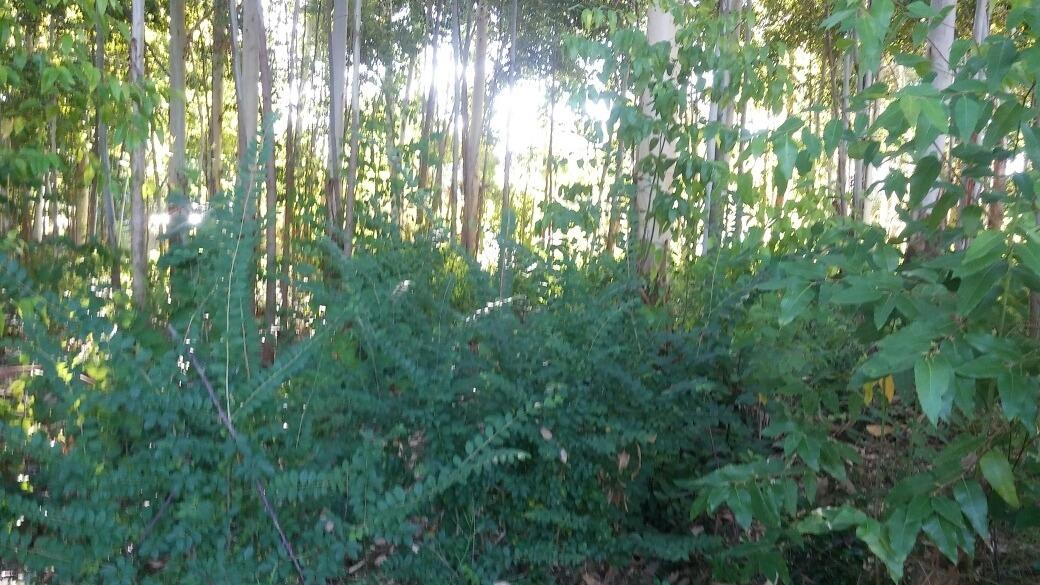 terreno con bosque 722 metros cuadrados