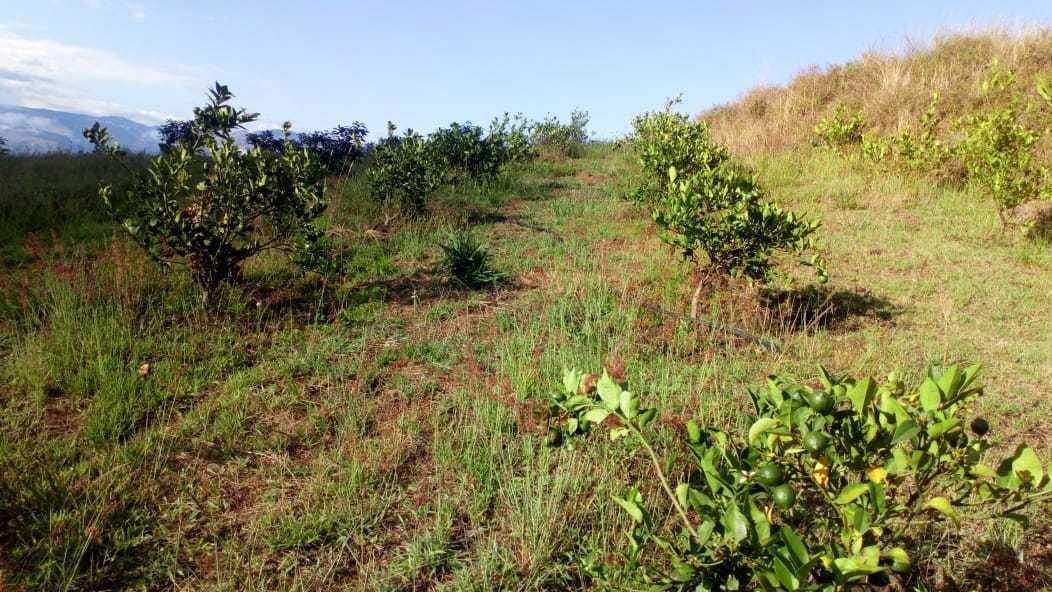 terreno con casa y 280 plantas frutales