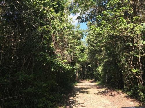 terreno con cenote en venta en la ruta de los cenotes puerto morelos