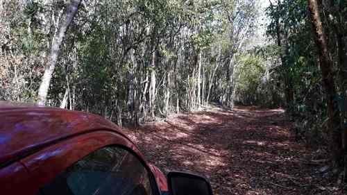 terreno con cenote en yucatán, ideal para proyecto ecoturistico