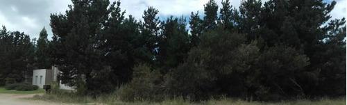 terreno con pinos en venta zona senderos 2 de costa esmeralda