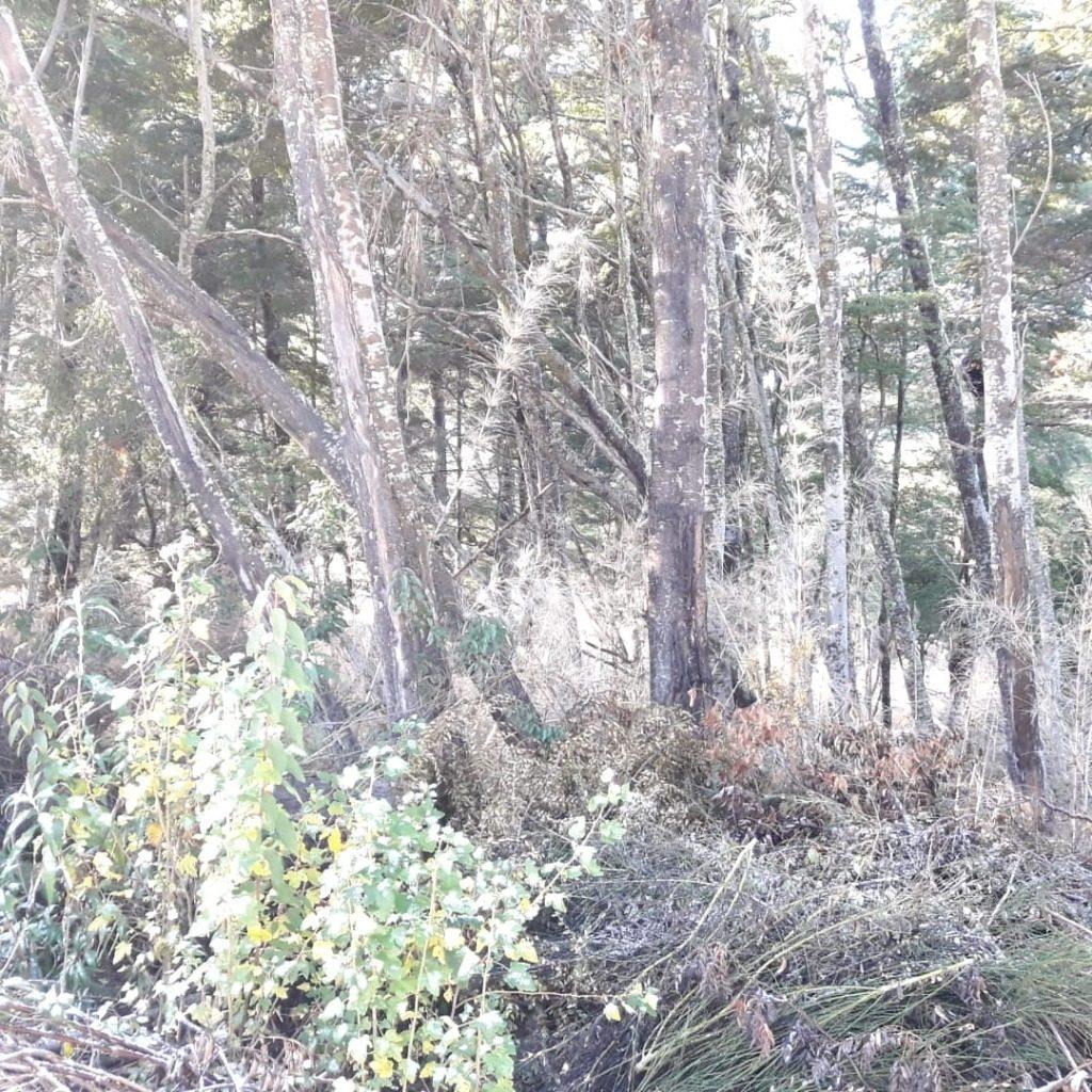 terreno de 1.050 m2 en villa la angostura