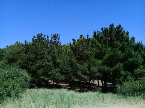 terreno de 1300 metros en mar y con pinos! costa esmeralda