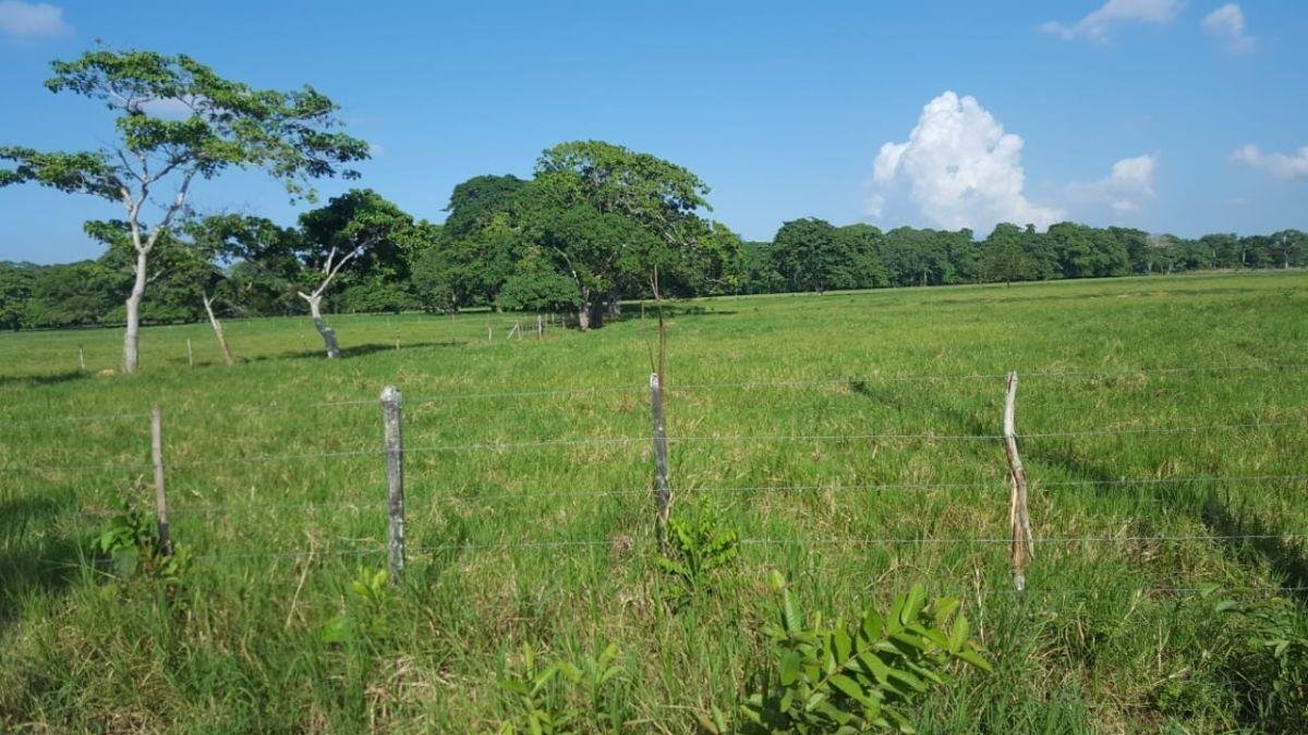 terreno de 1845 tareas ubicada en  villa rivas
