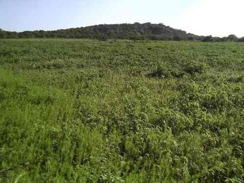terreno de 19.6 has, con escrituras, por la planta toyota en apaseo el alto,gto