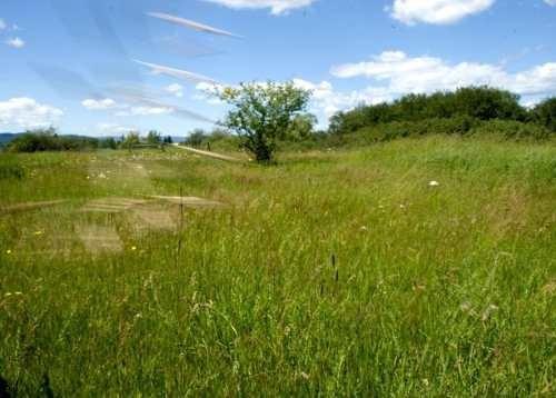 terreno de 4 hectareas campestre las boquillas raíces allende nl