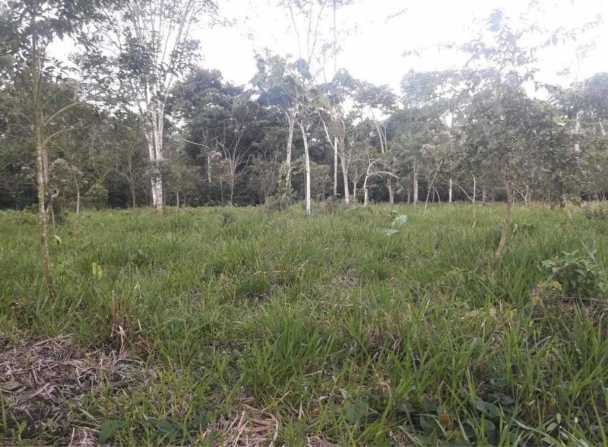 terreno de 7 hectáreas-sucumbíos