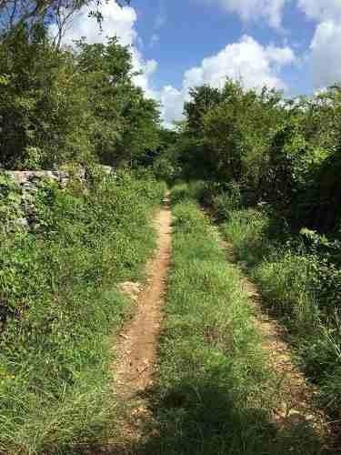 terreno de 7.7 hectáreas en telchac pueblo.