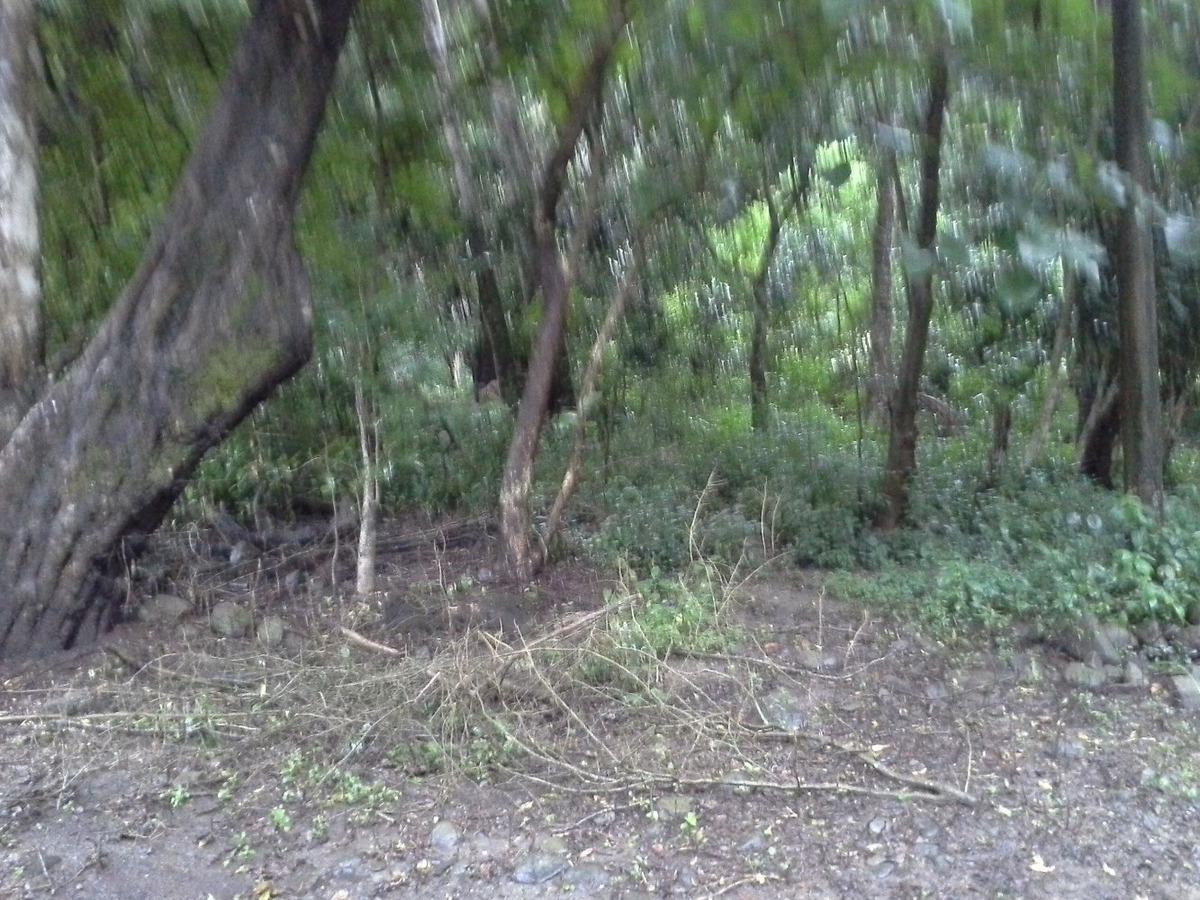 terreno de abangares