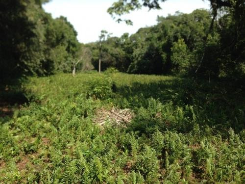 terreno de chácara em itanhaém/sp