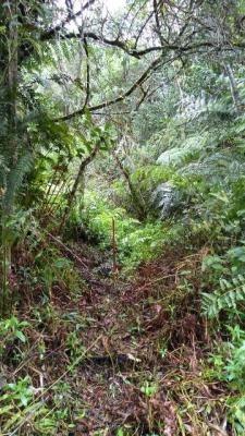 terreno de chácara escriturado, itanhaém-sp - ref 4391-p