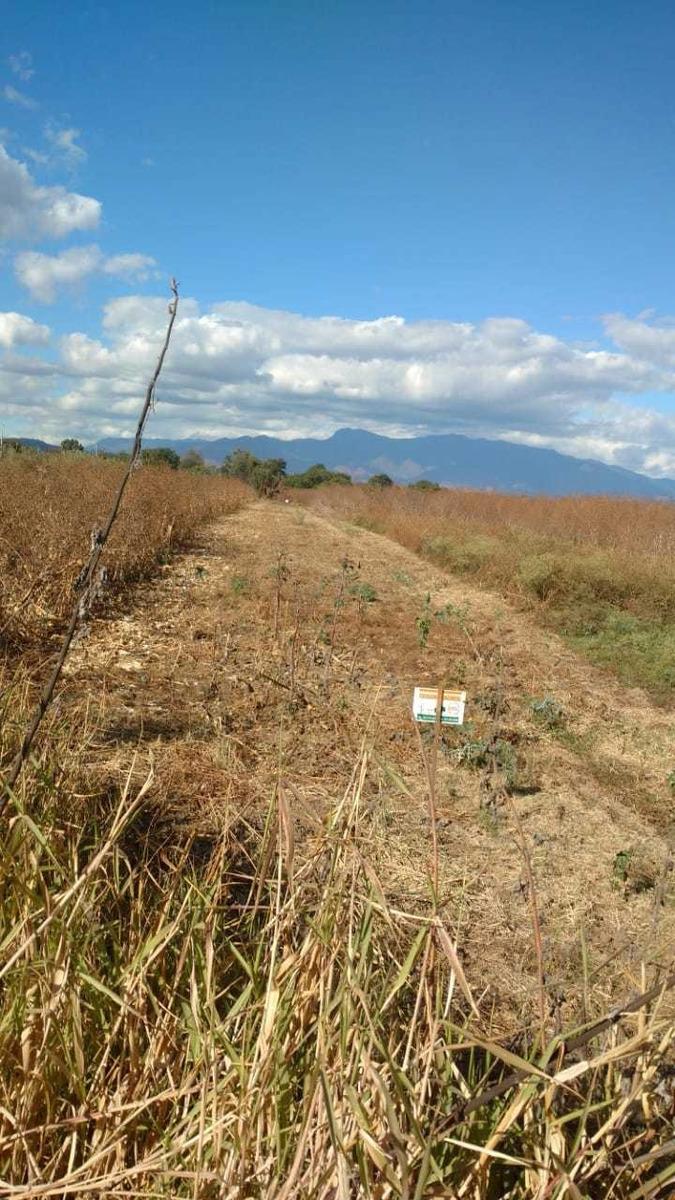 terreno de siembra