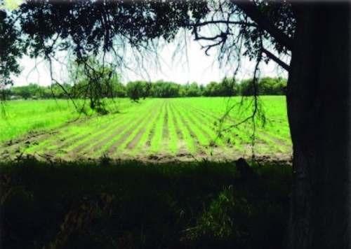 terreno disponible en venta en rancho el batán, texcoco