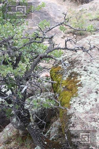 terreno - ejido nuevo majalca