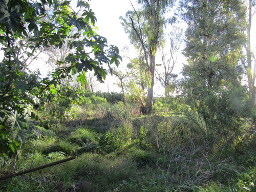 terreno - el jaguel