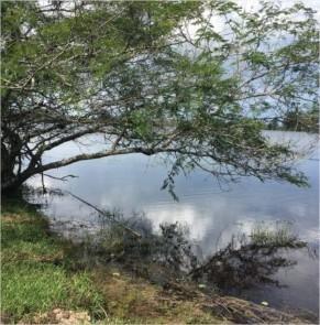 terreno em águas claras viamão - te0141