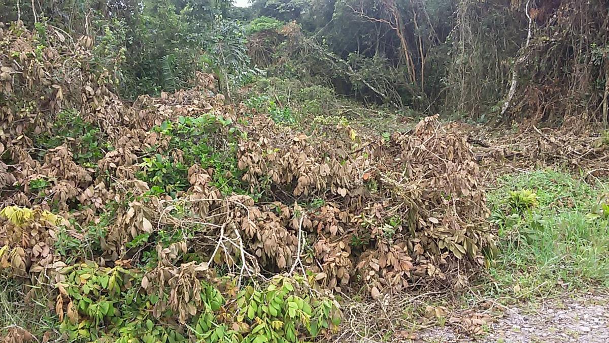 terreno em itapoá - balneário cambijú
