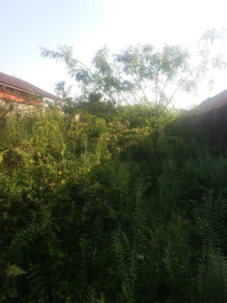 terreno em mongaguá, espaço para chácara ref 7750 e