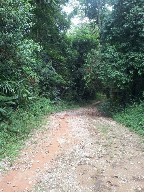terreno em serra da cantareira - são paulo, sp - 285010