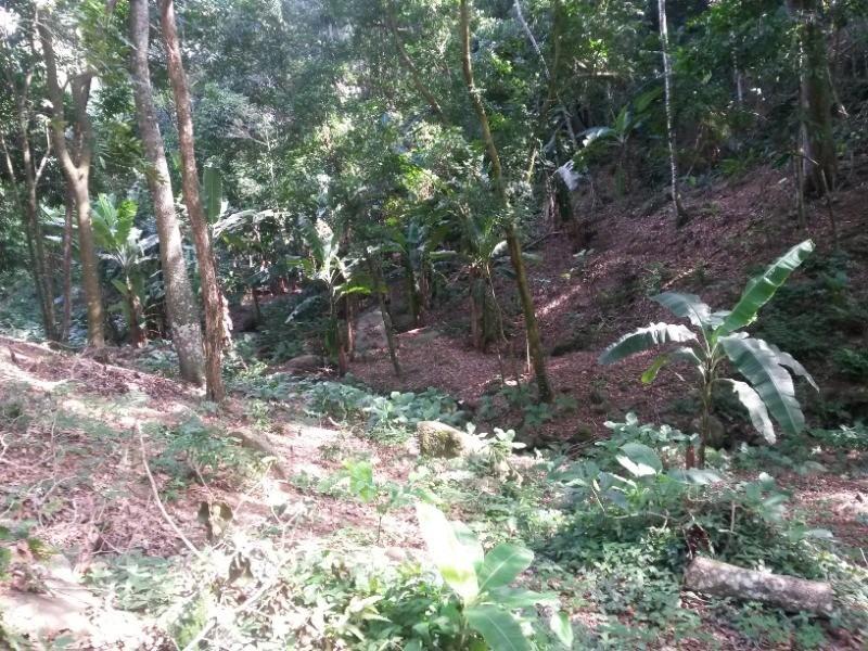 terreno em vargem grande, rio de janeiro/rj de 800m² à venda por r$ 170.000,00 - te98198