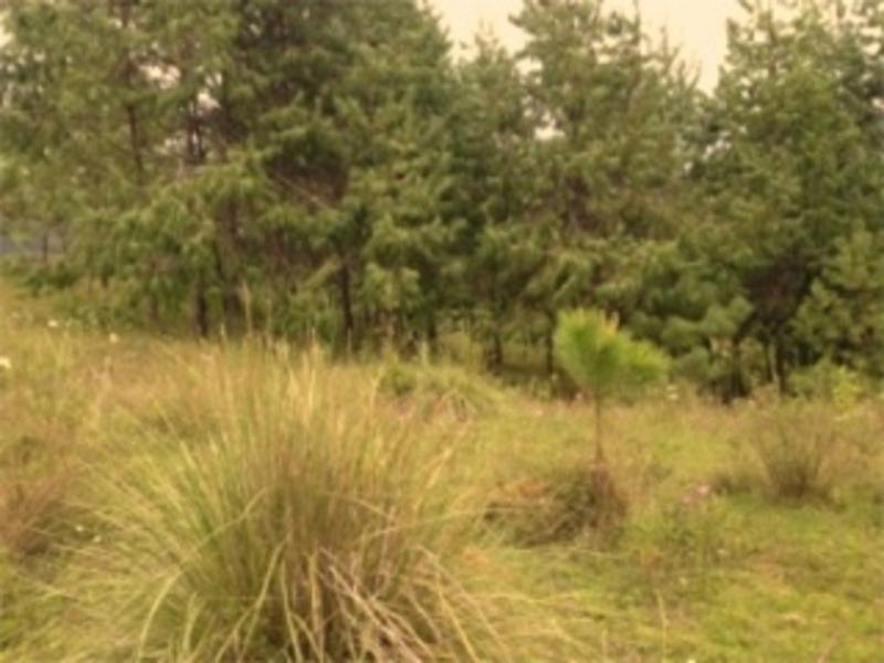 terreno en amanalco de becerra, amanalco