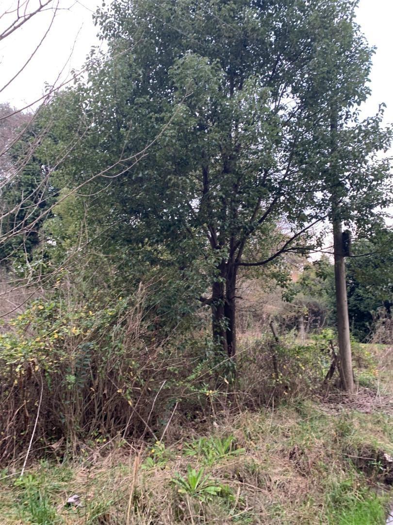 terreno en barrio los pinos