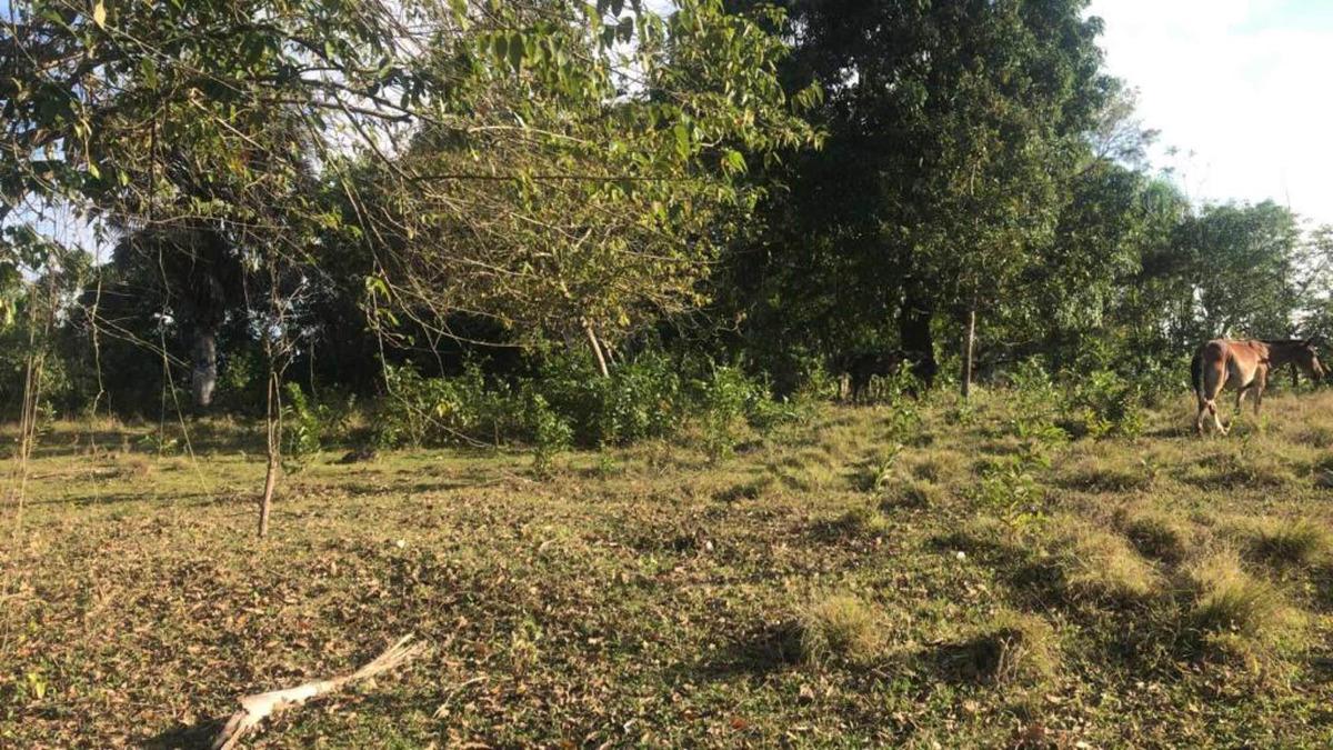 terreno en bayaguana 60 tareas