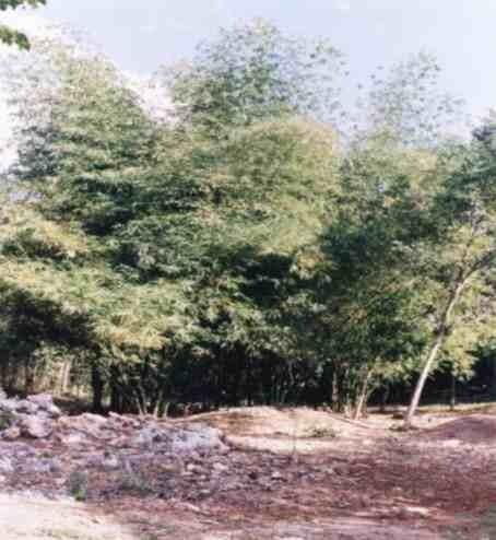 terreno en chunhuas quintana roo, mpio f. c. p. 1019 has.
