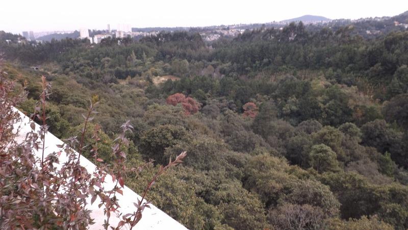terreno en conjunto de 20 casas en 70,000 metros en bosque.