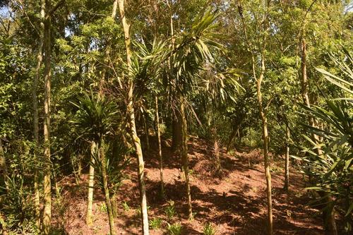 terreno en cuetzalan