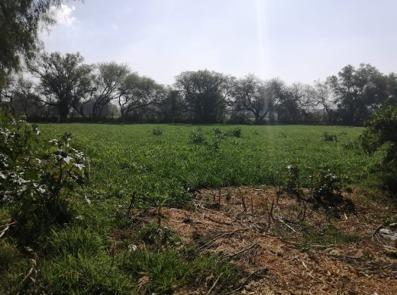 terreno en frente de arboledas, tula
