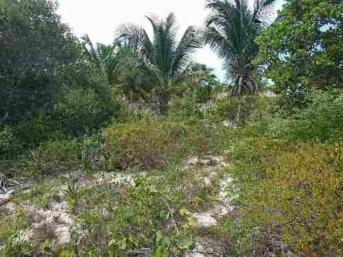 terreno  en la playa de   chelem