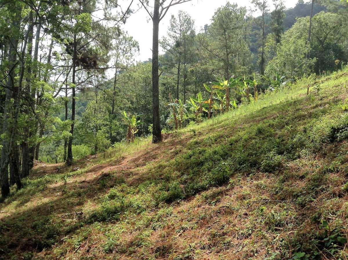 terreno en pinar quemado jarabacoa