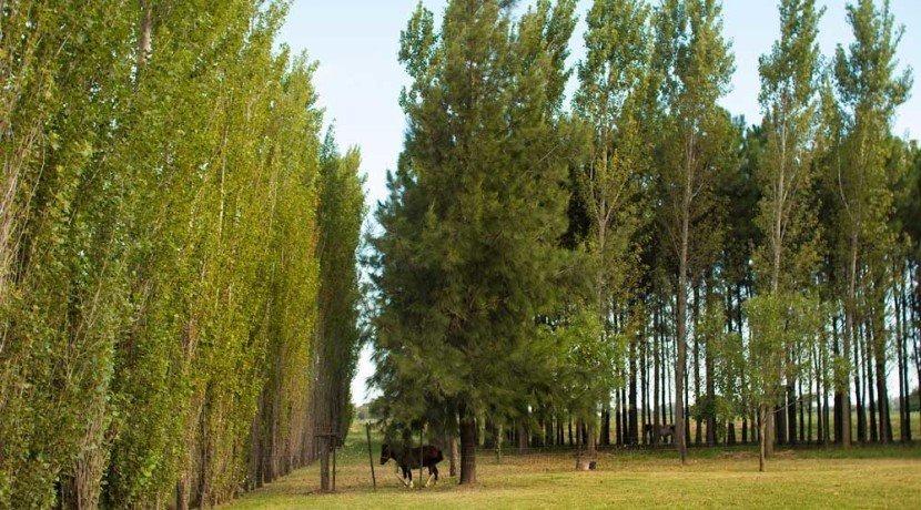 terreno en pinares del sur - barrio privado con excelente parquización - consultanos!