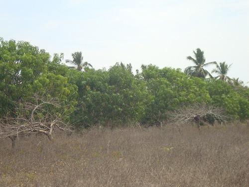 terreno en playa encantada zona de ejido el podrido