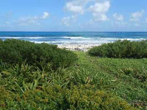 terreno en playa mundaca p1288