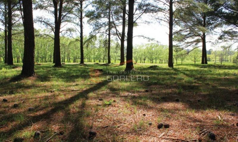 terreno en punta del este, camino lussich, chacras del pinar-ref:25779