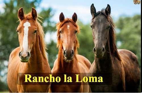 terreno en rancho la loma