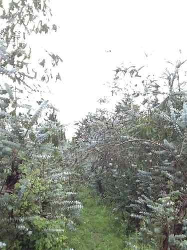 terreno en san bartolo, amanalco