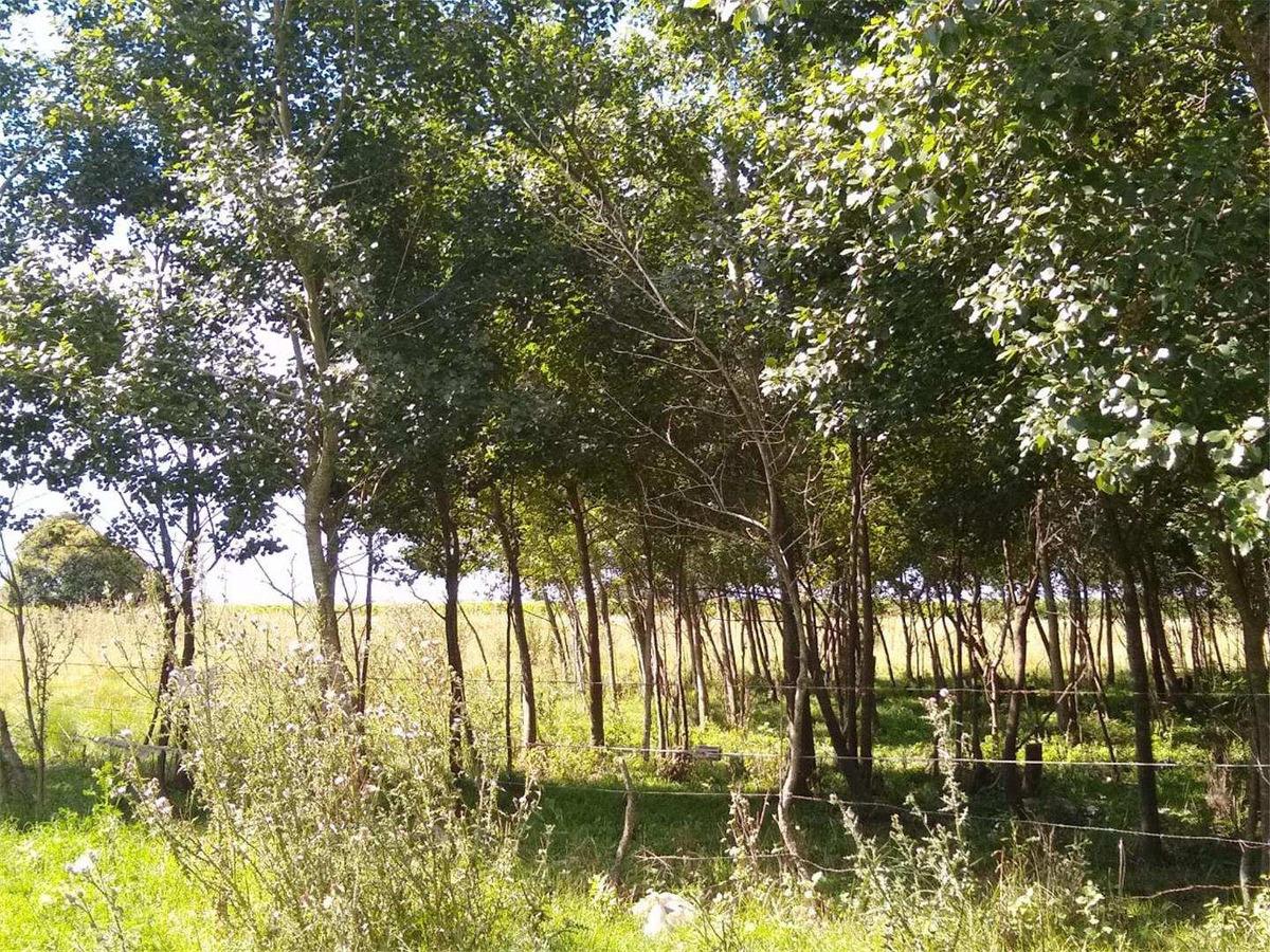 terreno en venta 2400m2   parque industrial   tandil